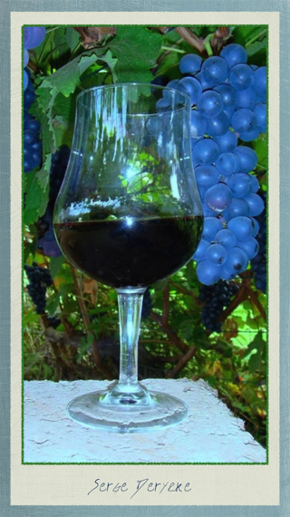 Vinho - Vin