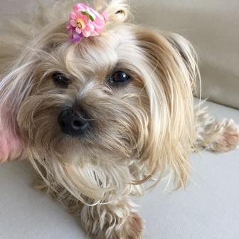 Mi - cachorro - Pet - cachorra