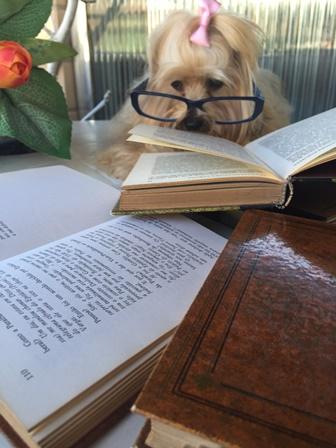 Livro - leitura - Mi - Mimosa - cachorro
