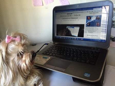 computador - pc - cachorro - Mi - Mimosa