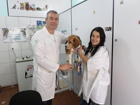 veterinario - veterinaria