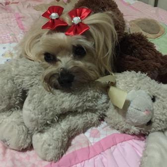 Reflexão - Mi - Mimosa -  cachorra