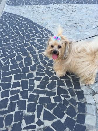 Rio - Copacabana - Mi - Mimosa - cachorro