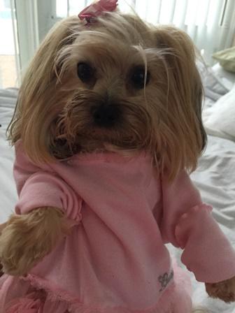 Roupa - vestido - cachorra - Mi - Mimosa