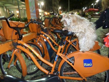 Itaú - bicicleta - Mi - Mimosa - cachorra