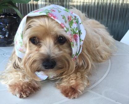 look - Mi - Mimosa - cachorra