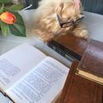 livros - cachorro - Mi - Mimosa