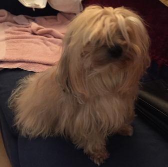 Mi - Mimosa - penteado - cachorra
