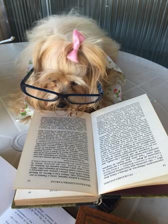 livro - leitura - cachorro - Mi - Mimosa
