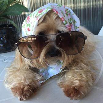 oculos - cachorra - Mi - Mimosa
