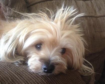 punk - Mi - Mimosa - cachorras